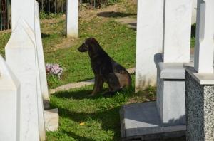 Hond op oorlogskerkhof Sarajevo