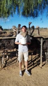 struisvogel knuffelen