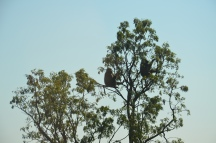 Bavianen Krugerpark