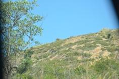 Leeuwen Krugerpark