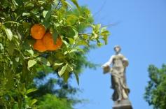 De geurende appelsienen.