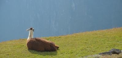 Ook een lama geniet van het uitzicht.