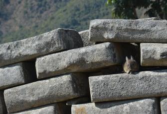 En als de muur toch niet zo stevig is, maken de konijnen er handig gebruik van.